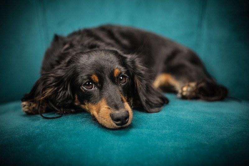 Как вывести запах собачьей мочи с дивана