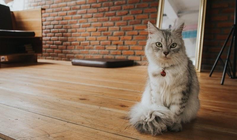 Убрать запах кошачьей мочи с пола