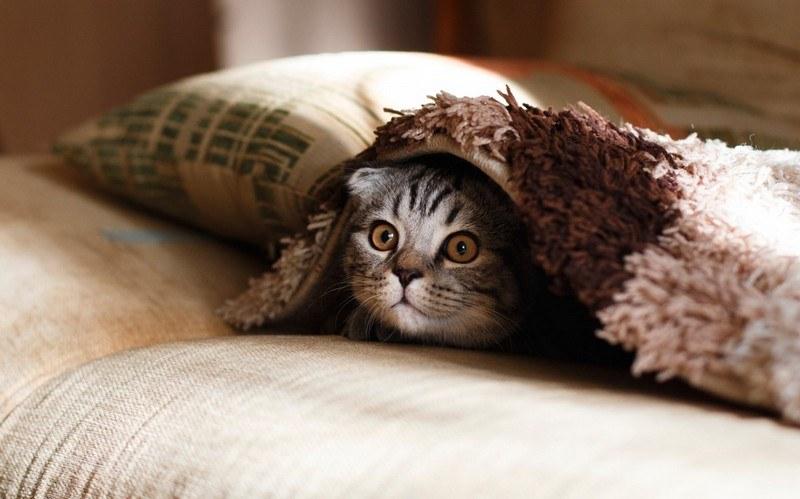 Вывести запах кошачьей мочи с дивана