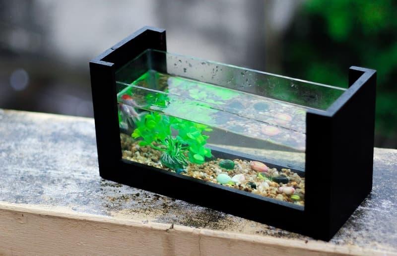Очистка стенок аквариума от известкового налета