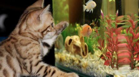 Как отмыть аквариум от известкового налета