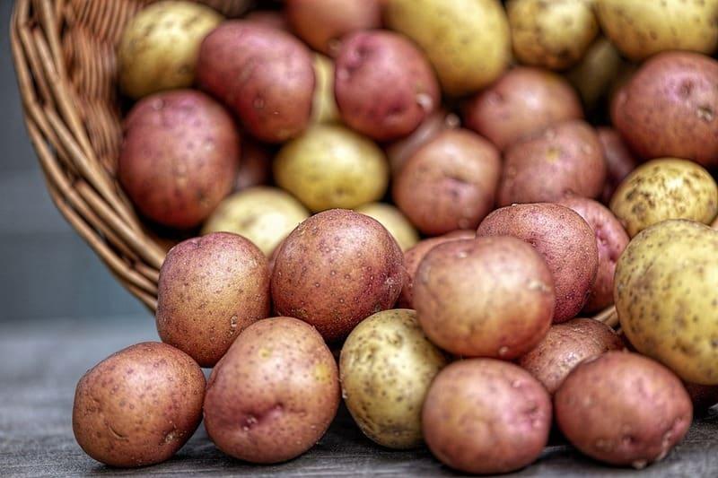 Сколько килограмм картофеля в ведре